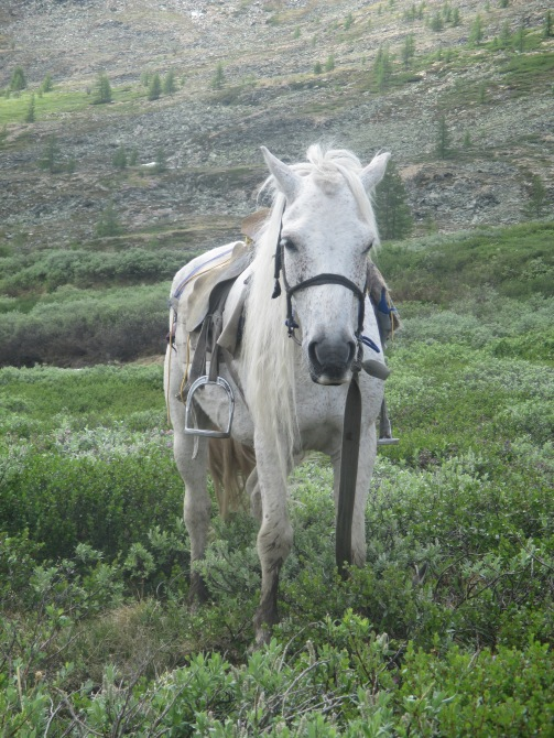This is Snapple, the horse I rode to and from the reindeer herders' camp (we each named our horses)