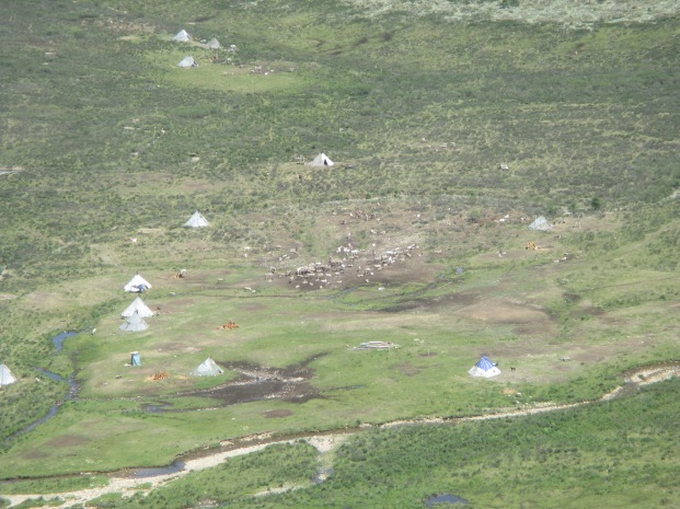And zooming in a little with my camera, we could even see the reindeer herds moving